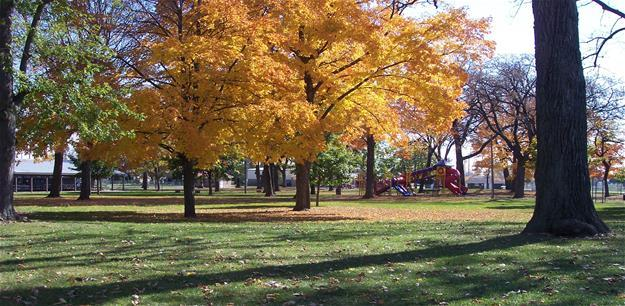 Fall Colors in the City Park